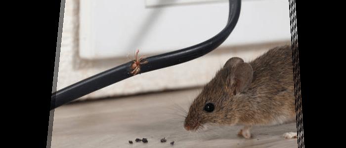 Rodent Control Randwick